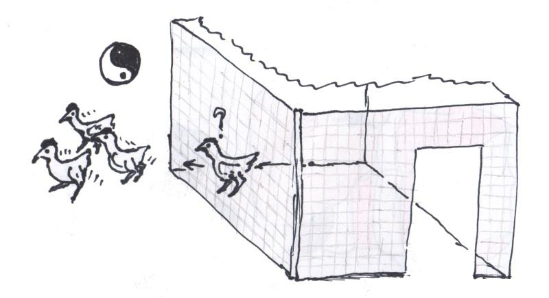 polli alla riscossa